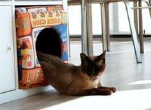 Melting cat Stock Image