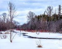 Melting creek in spring begins to flow. A few Canda geese relax on the ice at the edge of a small creek in Peterborough, Ontario, Canada as the ice starts to stock photos