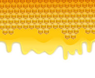Melting honey on honeycombs Royalty Free Stock Photo