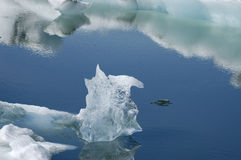 Melting ice. Stock Photography