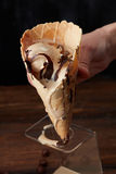 Melting ice cream in a waffle cone Stock Photography