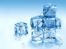 Melting ice cubes Stock Image