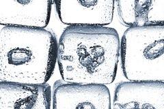Melting ice cubes Stock Photography