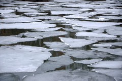 Melting ice floes in water Royalty Free Stock Photo