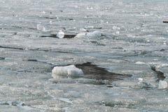 Melting ice on spring lake. 3.4.16 stock images