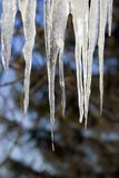 Melting Icicles Stock Photo