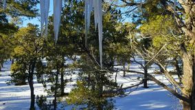 Melting icicles, dripping water with snowy ground and pine trees. Melting icicles and dripping water with snowy ground and pine trees on warm day stock video