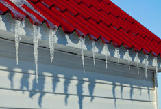 Melting icicles. Spring. Royalty Free Stock Photo