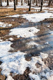 Melting puddles in spring forest Royalty Free Stock Photo