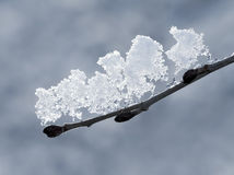 Melting Snow Royalty Free Stock Images