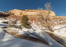 Melting snow carves a path through the fresh snow in this wash below East Temple in Zion national park royalty free stock photography