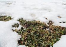 Melting snow Royalty Free Stock Photos