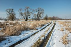 Melting snow on a country road through wild meadows, tall trees and clear sky royalty free stock photography