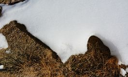 Melting of snow on dry grass. Melting of the snow on dry grass in winter Stock Image