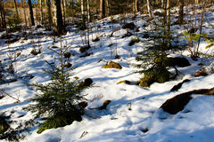 Melting snow in a forest in late winter Stock Photo