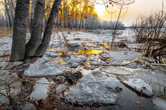 Melting snow. In the forest at sunset stock images