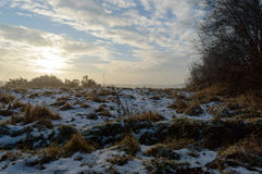 Melting snow on grass plants with the sun rising. Melting snow on brown grass plants with the sun rising over plants in the back on a cold winter morning Stock Photos