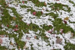Melting snow on green grass and brightly colored autumn leaves - background.  stock photos