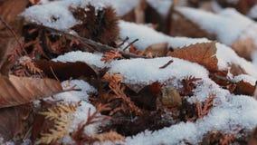 Snow melting closeup stock footage