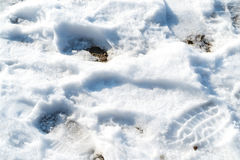Melting snow with human shoes footprints Stock Photography