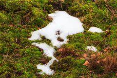 Melting snow midst grass Royalty Free Stock Photography