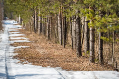 Melting snow road near the spring forest edge Royalty Free Stock Photos