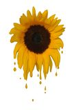 Melting Sunflower Stock Photo