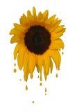 Melting Sunflower. Concept illustration depicting a sunflower melting for the summer heat Stock Photo