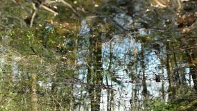 Meltwater impassable forest swamp. In  spring, reflected in water, abstract background loop stock video footage