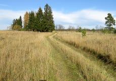 Memórias cobertos de vegetação da estrada de floresta de feriados da infância na vila foto de stock royalty free