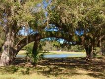 Membre de courbement entre les arbres avec le lac Images libres de droits