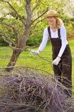 Membres d'arbre de nettoyage de jeune femme Photographie stock