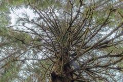 Membres d'arbre moussus image stock
