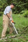 Membres de découpage outre des arbres tombés Images stock