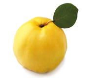 Membrillo dulce con licencia Foto de archivo libre de regalías