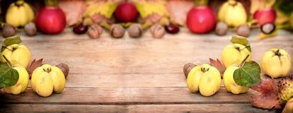 Membrillo orgánico, cosecha del otoño del membrillo de la manzana en la tabla rústica imagen de archivo libre de regalías