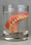Membro da dentadura imagens de stock royalty free