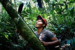 membro tribal do ticuna local que mede um log para cair no meio da floresta úmida imagens de stock