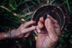 Membro tribale che raccoglie le larve e gli insetti da un albero caduto del sagù nella t fotografie stock libere da diritti