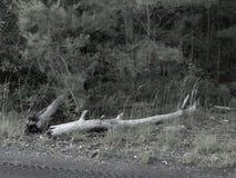 Membros caídos nas madeiras Imagem de Stock Royalty Free