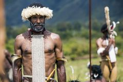 Membros duma tribo de Dani no festival anual do vale de Baliem fotos de stock royalty free