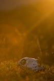 Memento mori pojęcie Obrazy Stock