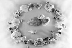 The Memoirs on the sea. The Circle from cockleshells and stones Royalty Free Stock Photo