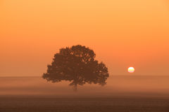 Memorable lonely tree in the morning mist Royalty Free Stock Photo