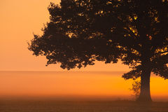 Memorable lonely tree in the morning mist Stock Photo