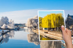 Memorable picture summer willow tree vs winter Stock Images