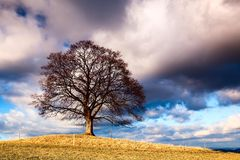 Memorable tree Stock Images