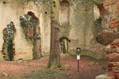 Memorable tree growing in the ruins of the chapel of St. Mary Magdalene royalty free stock photography