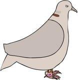 Memoria de la paloma Imagen de archivo