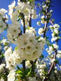 Memoria de la primavera de la floración imagen de archivo libre de regalías
